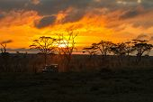 Morning safari drive. Beautiful sunrise in Serengeti national park, Tanzania