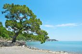 Big beautiful tree on the shore of the bay.