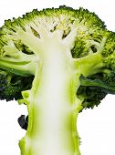 Delicious broccoli on a white background