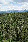 Alaska's Vast Wilderness