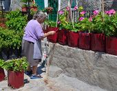 Old Greek Lady Painting Plant Pots