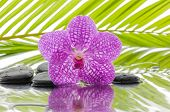 spa concept with orchid and wet black stones with palm leaf