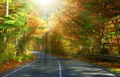 Asphalt road through the forest . A series of pictures of autumn road