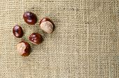 Horse  Chestnuts At Burlap Surface
