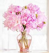 Beautiful pink peonies in a pink glass vase in front of a lace covered window.