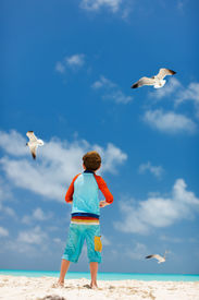 stock photo of flock seagulls  - Little boy and a flock of seagulls at Caribbean beach - JPG