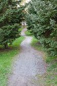 foto of conifers  - Small footpath in park between conifer trees - JPG