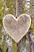 image of carving  - carved wooden heart on tree bark as symbol for love - JPG