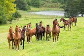 pic of pastures  - horse herd on the pasture - JPG