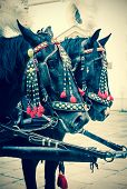stock photo of carriage horse  - Horses of wedding carriage in Cracow  - JPG