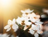 stock photo of sun flare  - Springtime - JPG