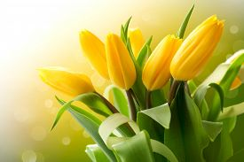 pic of yellow buds  - Spring Flowers bunch - JPG