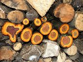 Colourful Firewood