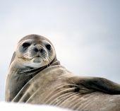 Seal Guardian