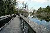 pic of wetland  - The boardwalk through the wetland at Spring Lake Park - JPG