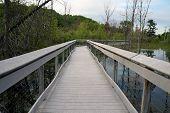 image of wetland  - The boardwalk through the wetland at Spring Lake Park between Harbor Springs and Petoskey - JPG
