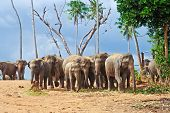 Flock Of Elephants In The Wilderness