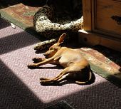 Sleeping Dog