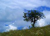 Storm...(2)