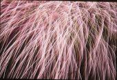 Mittsommer-Feuerwerk