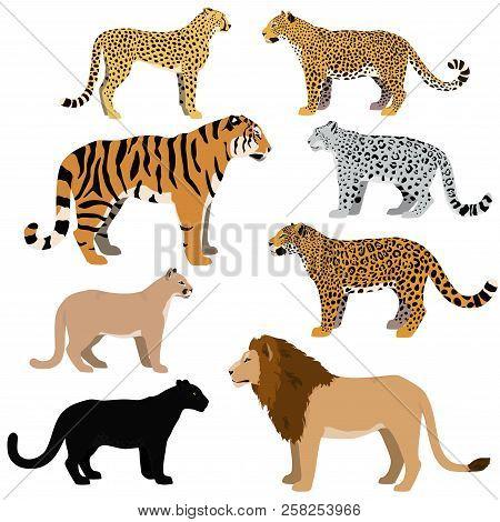 Cartoon Big Cats Vector Set