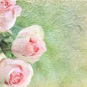 Pink roses on background with copy space.