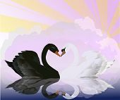 illustration with black and white swans at pink sunset