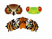 stock photo of orange frog  - vector tiger owl frog eyes - JPG
