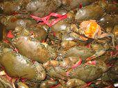 Crab Galore