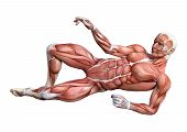 3D Rendering Male Anatomy Figure On White poster