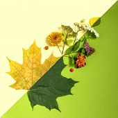 Contrast Of Summer And Autumn On Example Of Leaves And Flowers. Concept Of Seasonal Changes. Minimal poster