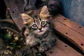Portrait Of A Street Kitten. Striped Fluffy Kitten With Beautiful Eyes poster