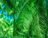 Tropical Palm Leaves, Floral Pattern. poster