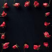 goth style dry red roses on black background poster