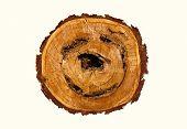 Smile-shaped log of wood