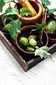 Natural Herbs Medicine,datura poster