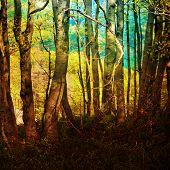 Rainbow Woods