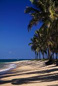 Exotic tropical palm beach Brazil