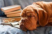 Dog Fell Asleep in Pile of Books
