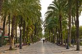 Tropical palm alley in Alicante, Spain, Europe