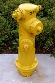 A yellow fire hydrant