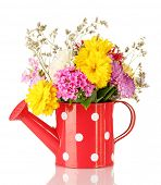 Red watering can with white polka-dot with flowers isolated on white