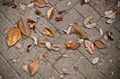 Leaves Fallen onto Stone Brick Sidewalk
