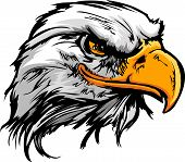 image of hawk  - Vector Bald Eagle or Hawk Head Mascot Graphic - JPG