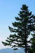 Tree Silhouette Mountains Blueridge Parkway
