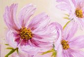 stock photo of cosmos flowers  - Cosmos - JPG