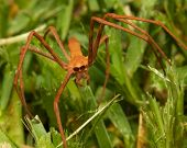 stock photo of creepy crawlies  - Net - JPG