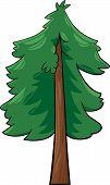Cartoon Illustration Of Conifer Tree