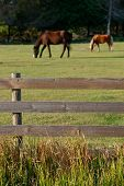 Horses Behind Wood Fence