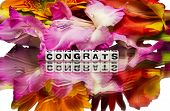 stock photo of congrats  - Congrats with some flowers on white background - JPG